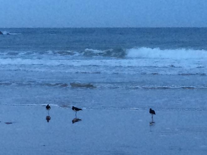 Birds on beach Sept 1 2014