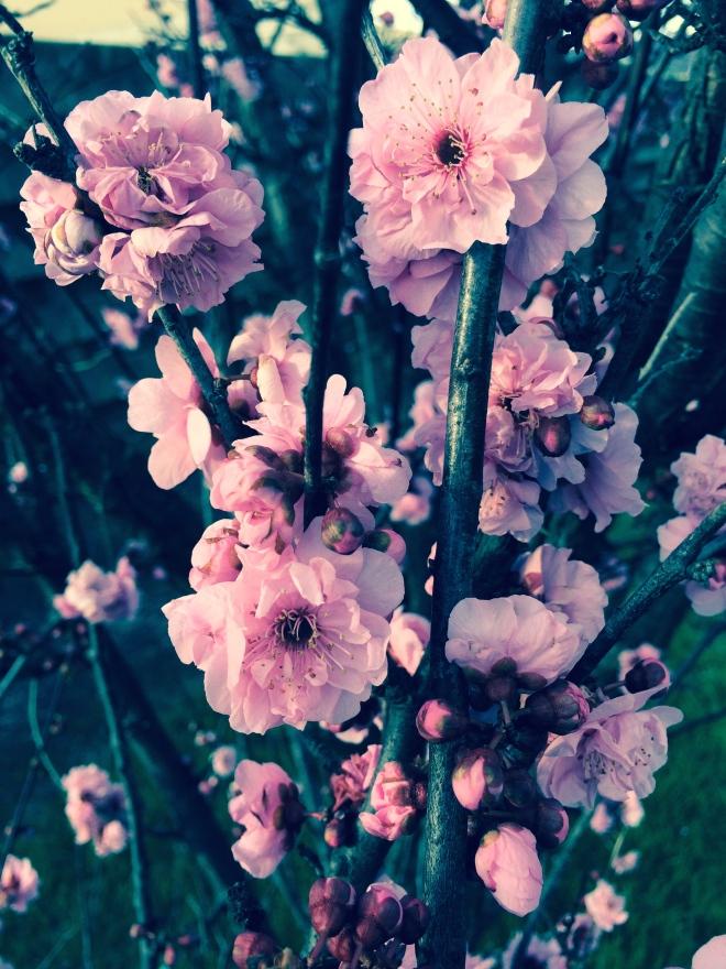 Spring blossoms Aug 5 2014