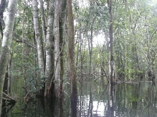 Making our way though the dense and sometimes tangled vegetation of the flooded forest was a magical experience.