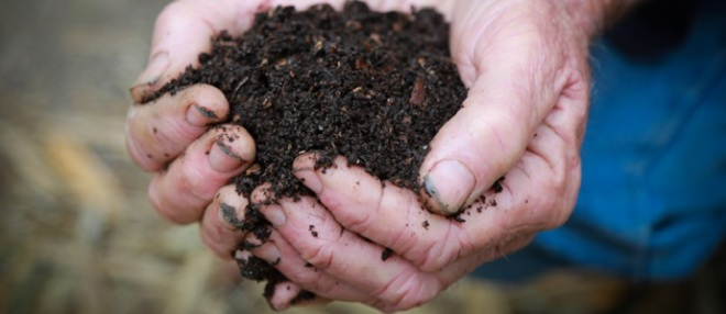 Worms provide many benefits to soil as shown by this handful of rich soil from a worm farm. Charles Darwin referred to them as nature's ploughman.